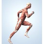 Struttura Muscolo Scheletrica