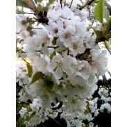 Prodotti ayurvedici per la primavera