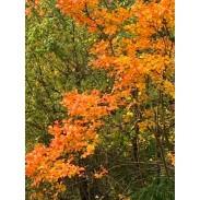 Prodotti ayurvedici per l'autunno