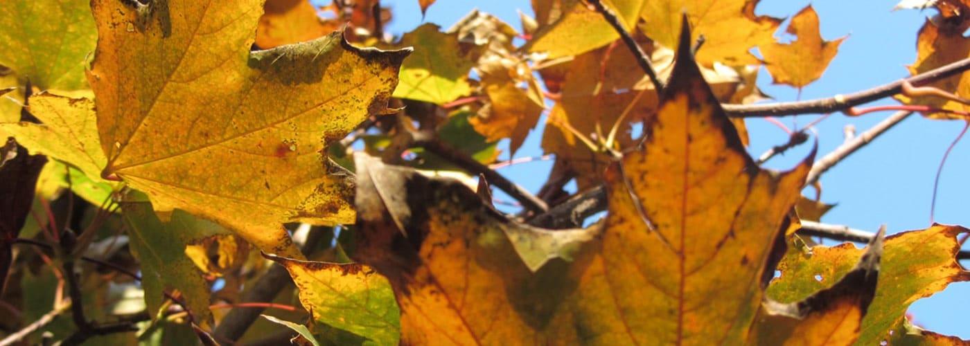slider-autunno2