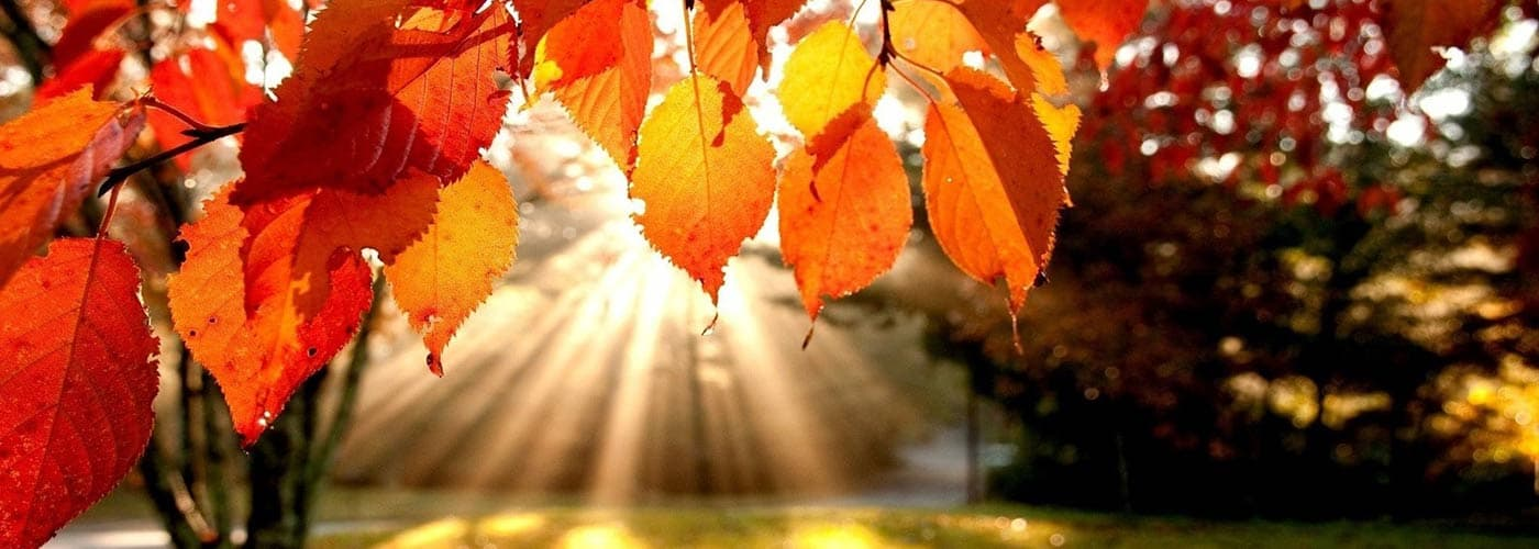 autunno Virya
