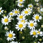 Erbe e piante rimedi per l'insonnia