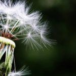 allergie primaverili rimedi naturali